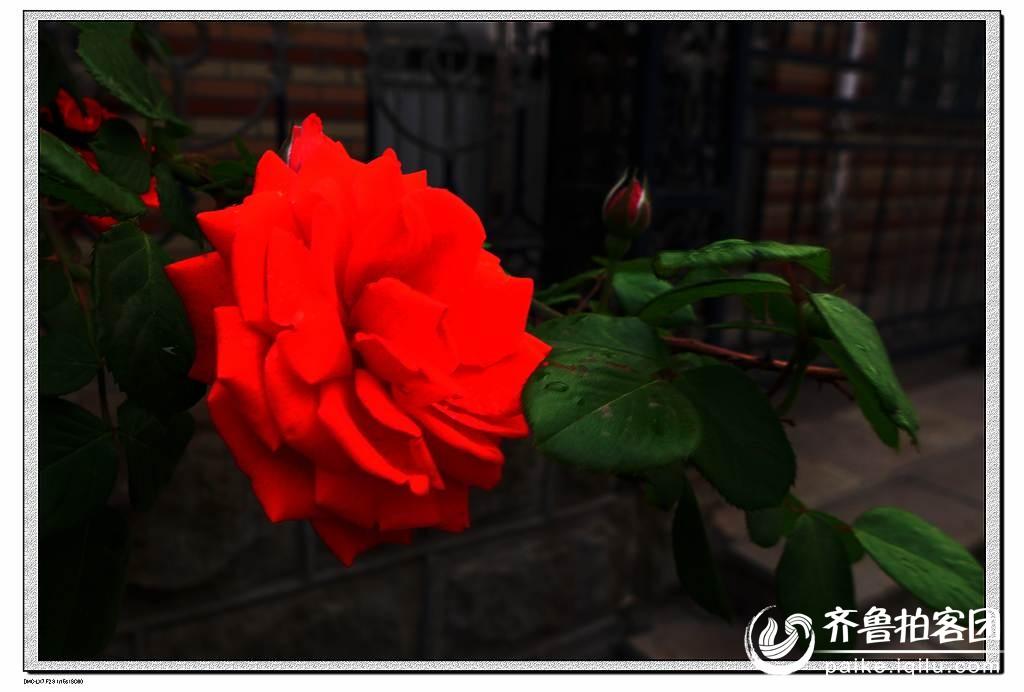 海绵纸折玫瑰花 图解 教程展示