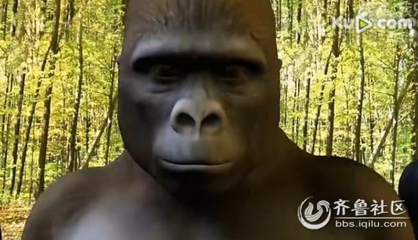 猩猩伸手要钱表情包gif图片图片图片