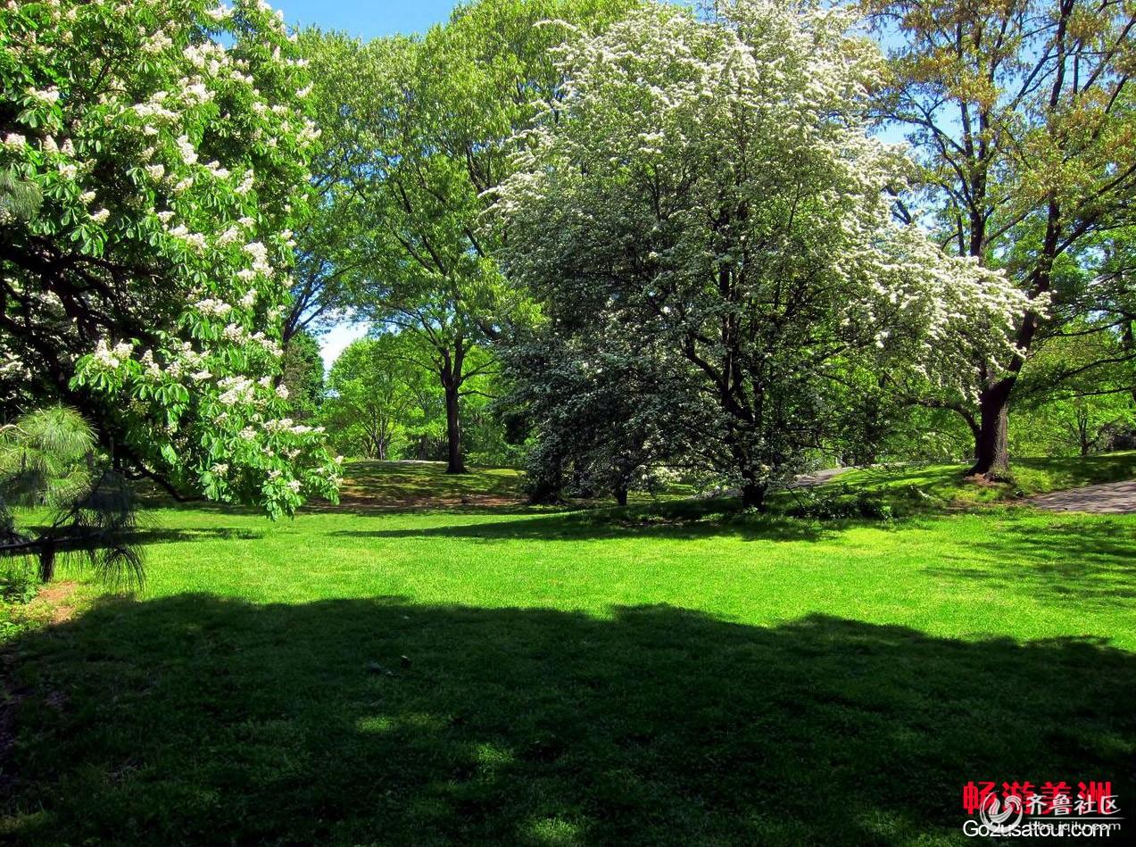 窥探立夏中中央公园,绿茵慢步一日行