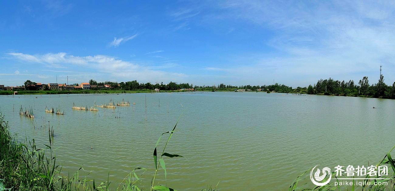 成武小东湖湿地风光--( 高清大图 ) - 菏泽拍客