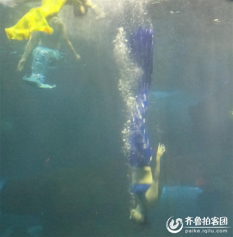 动物百度图片 水中