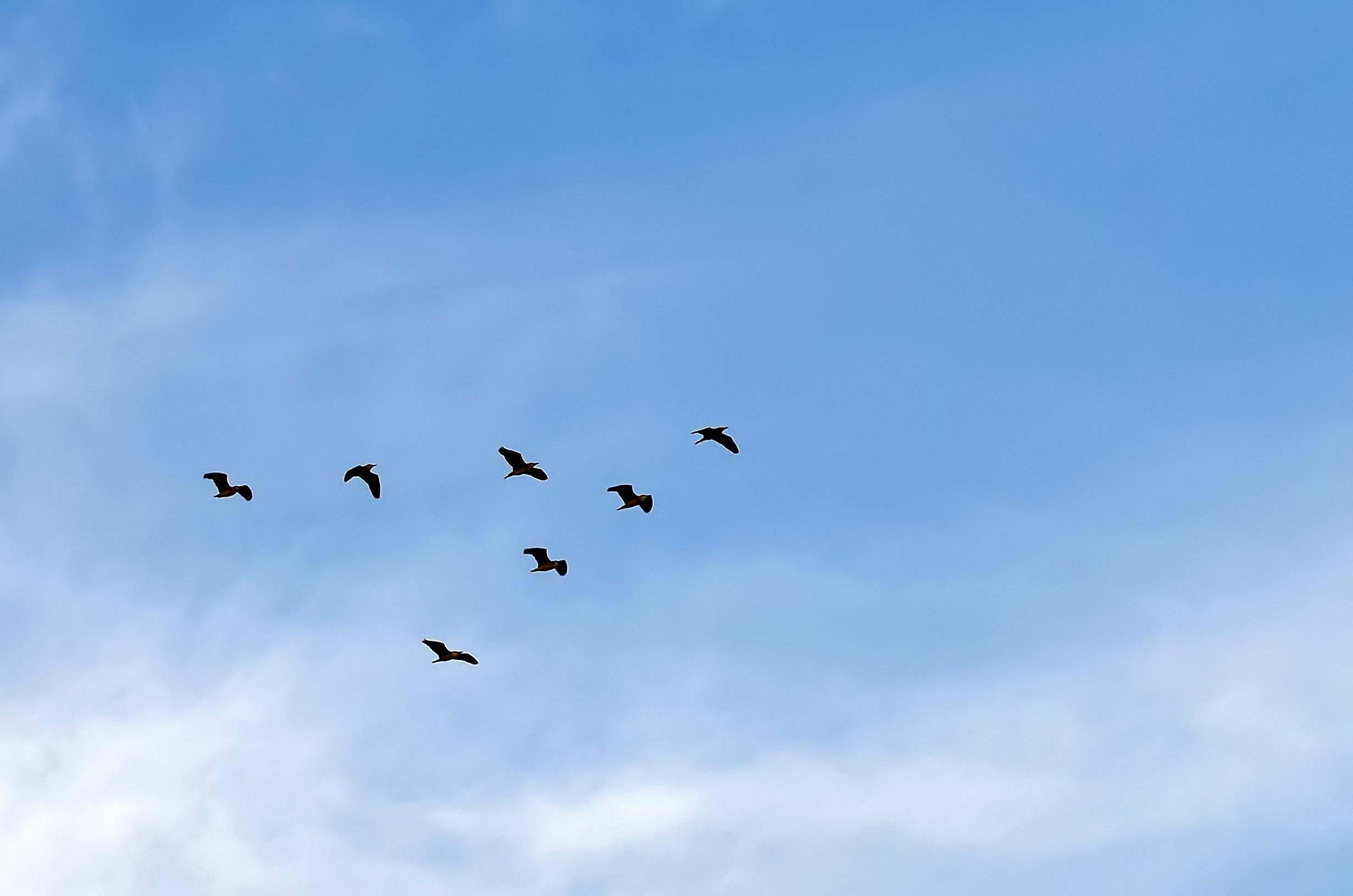 飞翔在兰天上的小鸟