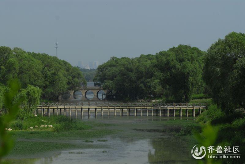 泰山西麓,天平湖濕地綜合治理保護工程,大河濕地公園目前初具規模圖片