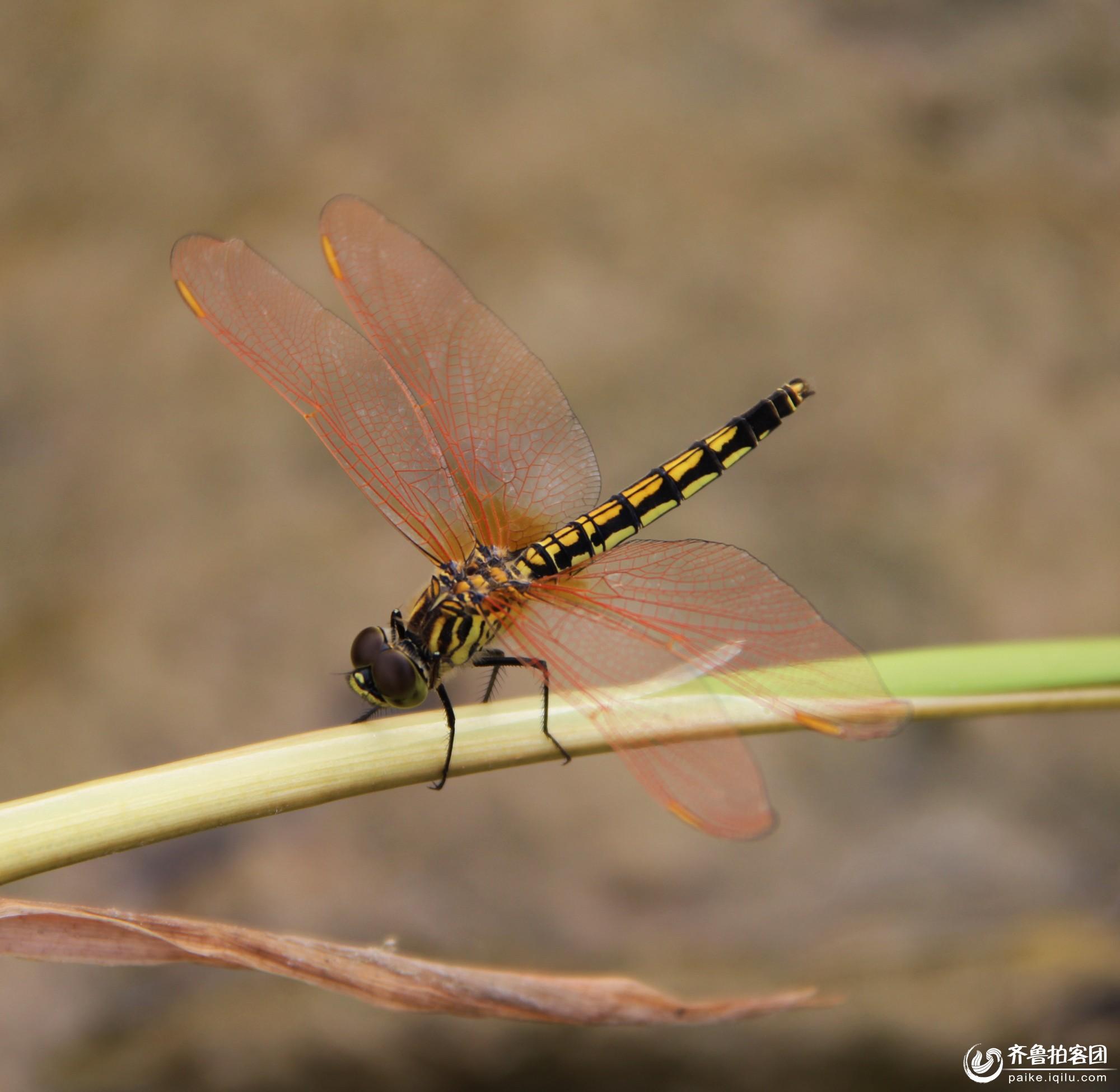 蜻蜓的生活环境