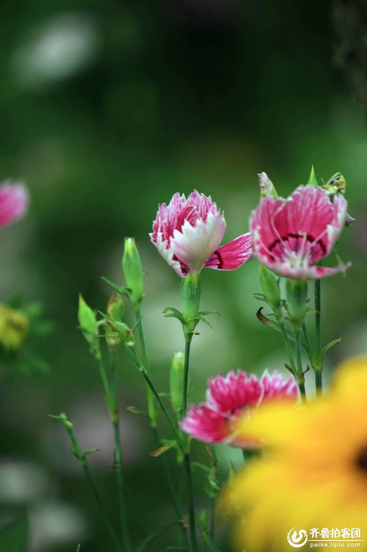 雨中漫步の日照植物园 - 济宁拍客 - 齐鲁社区 - 山东