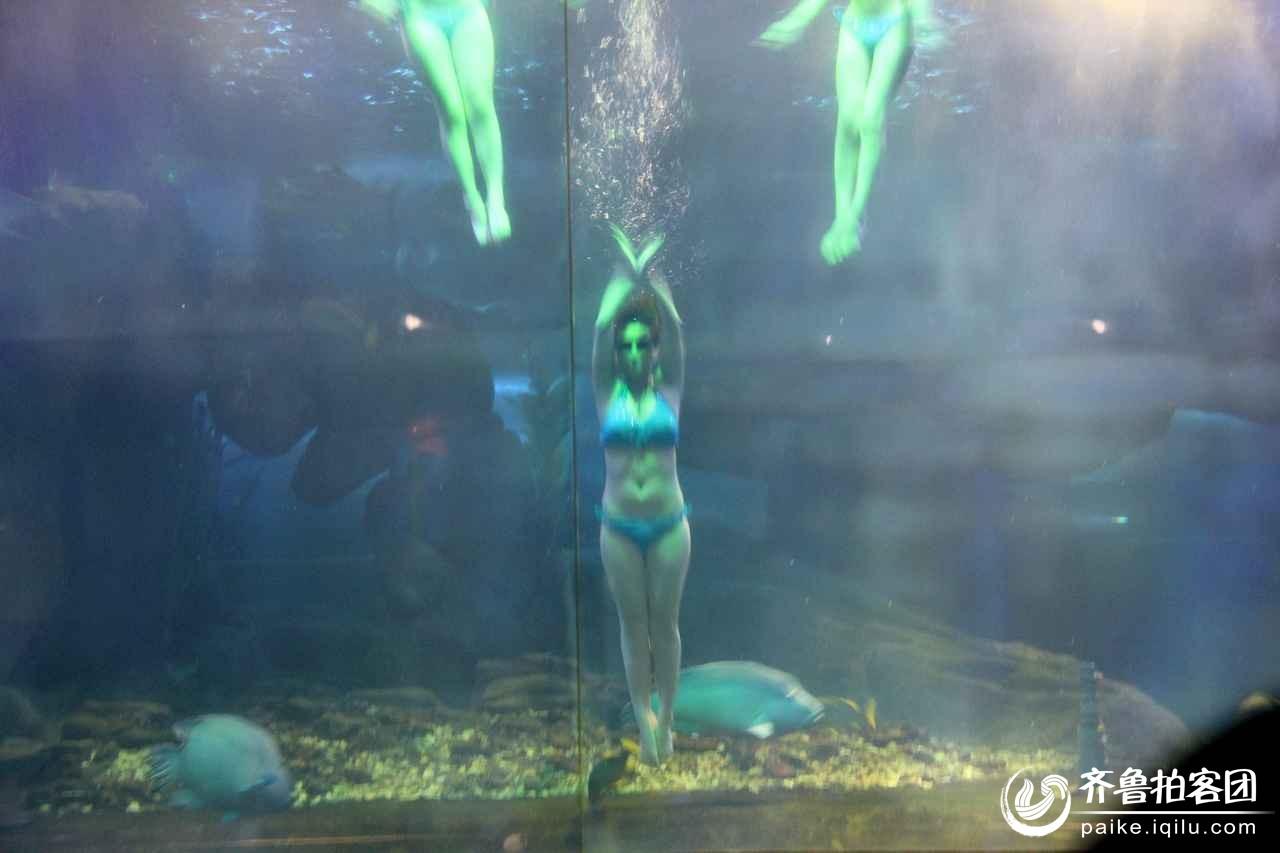 壁纸 海底 海底世界 海洋馆 水族馆 游戏截图 1280_853