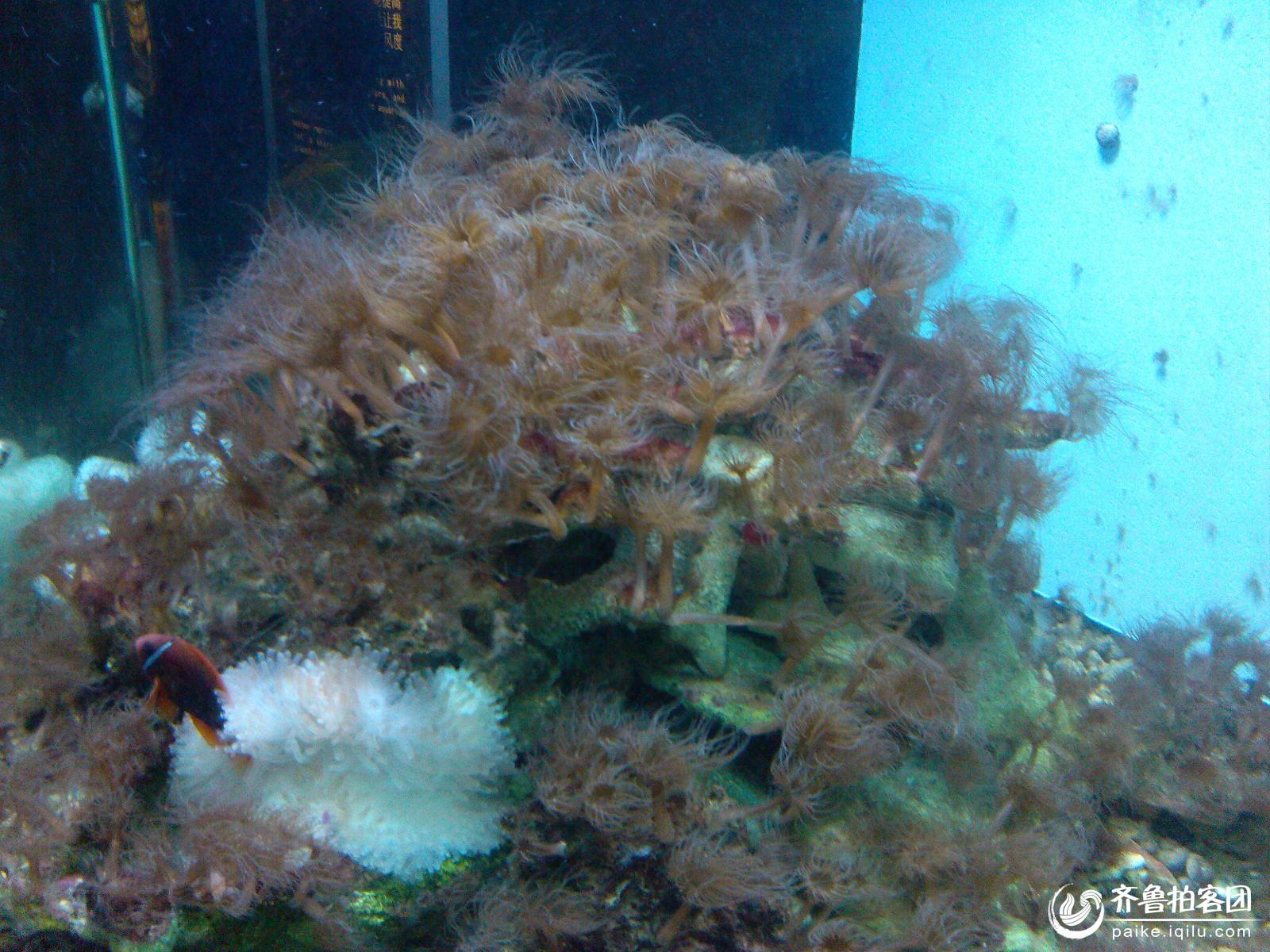 神奇的海底世界 - 东营拍客