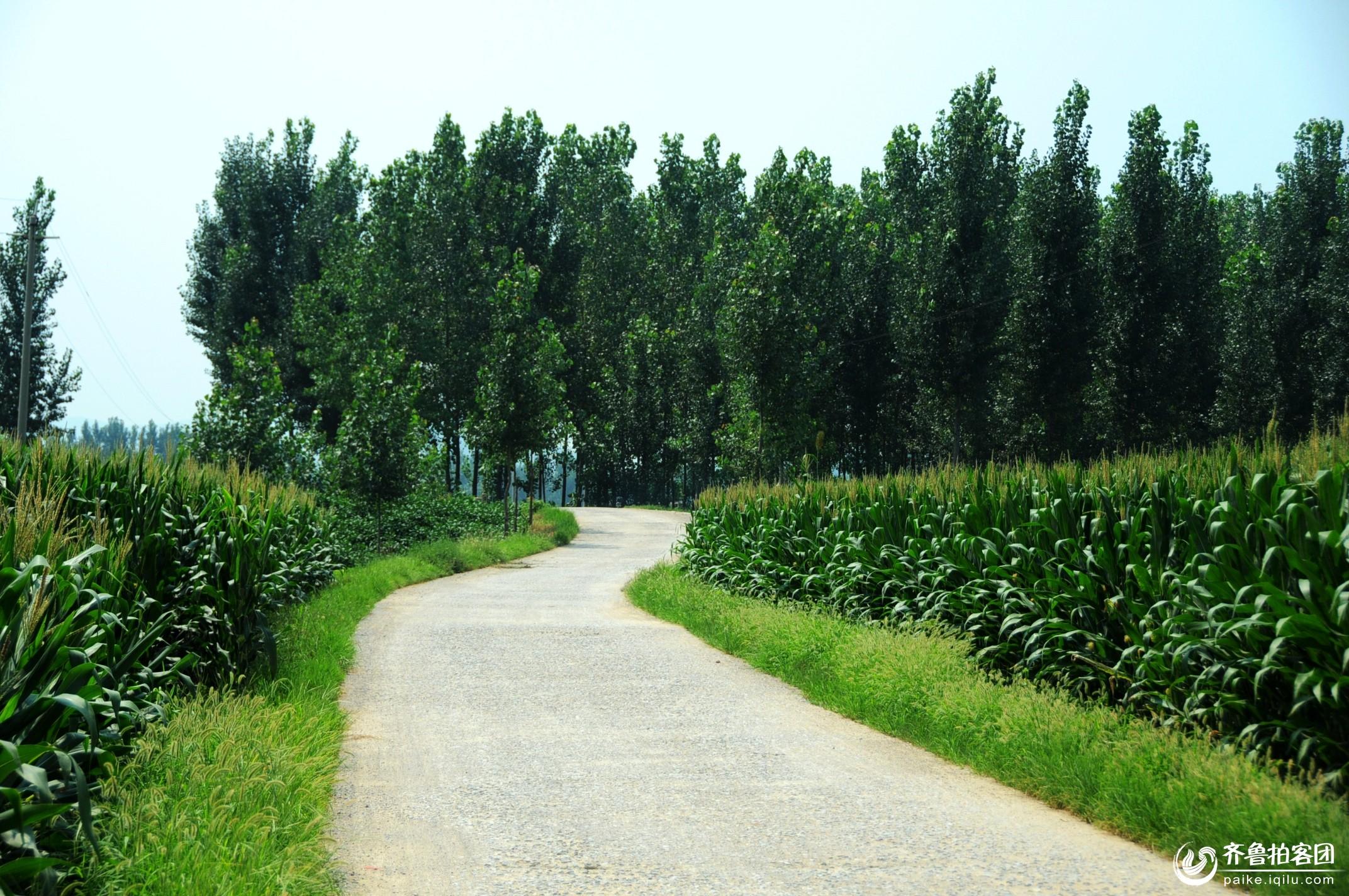 走在乡间的小路上,没看到牧归的老牛,陪我的,只有路旁浓密的