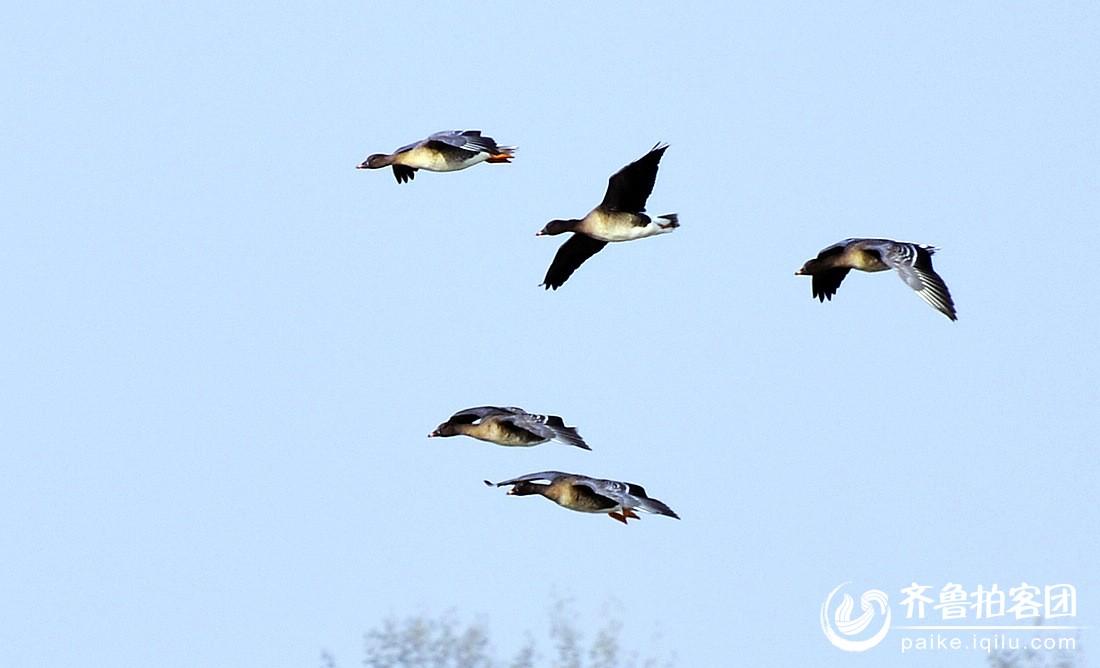 壁纸 动物 鸟 鸟类 1100_668