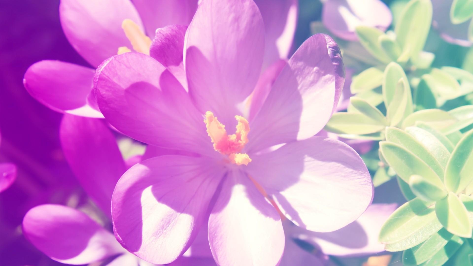 小清新花卉超大桌面壁纸