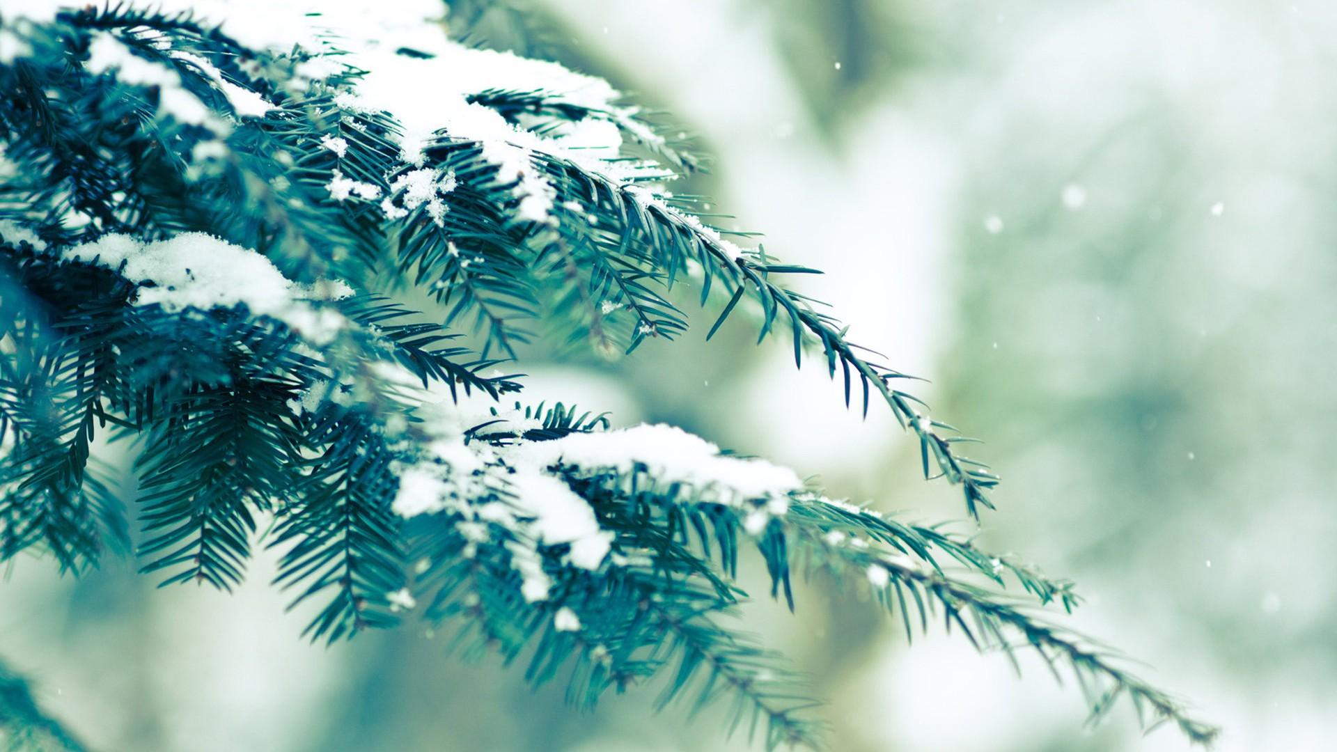 唯美冬季雪景高清桌面壁纸