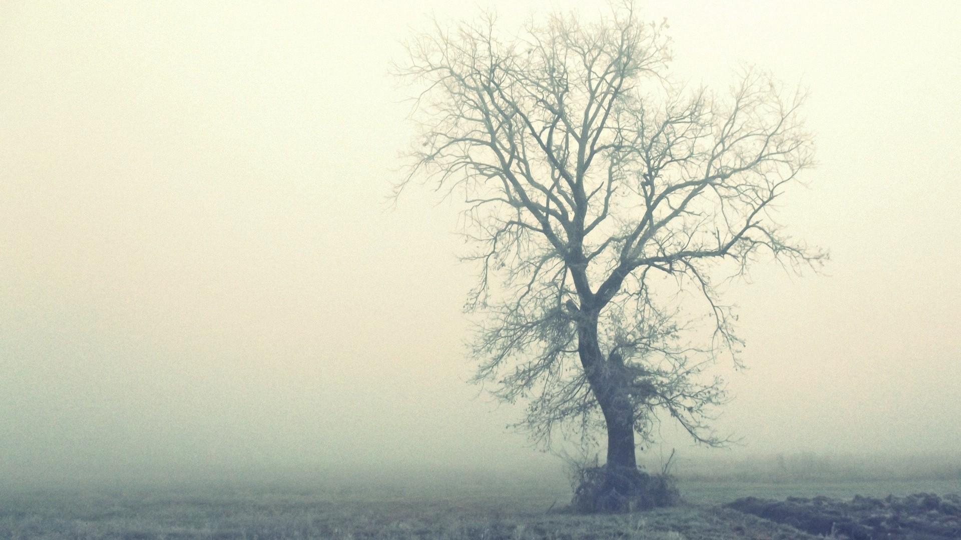 清晨的雾高清桌面壁纸