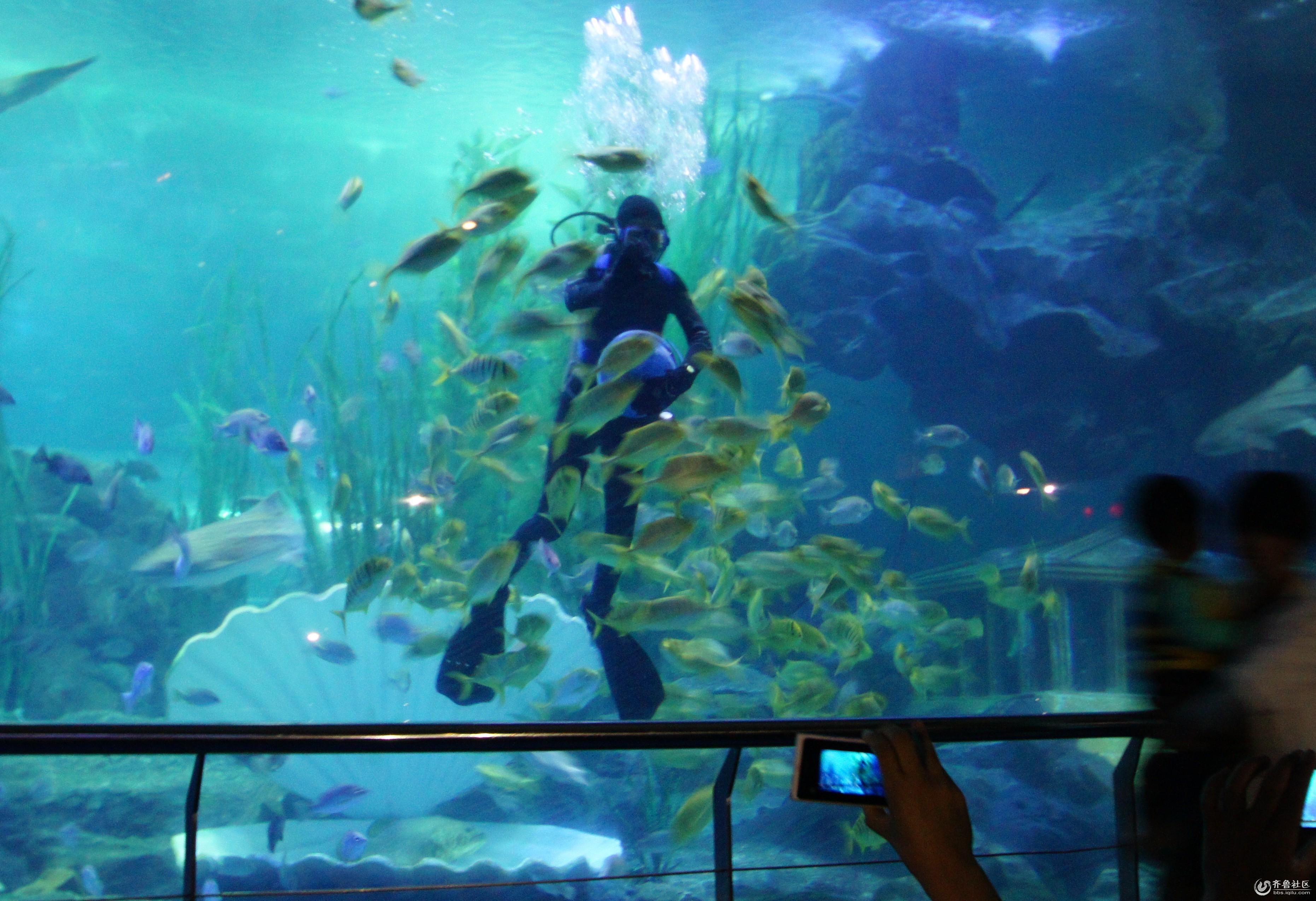 到了青岛参观海底世界,才算到了海边青岛