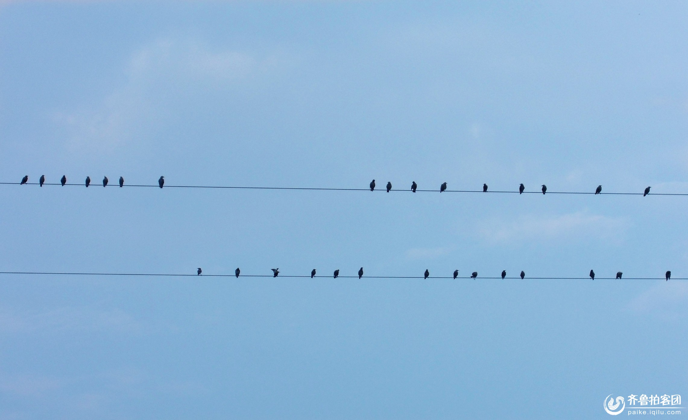 """小鸟的""""音符"""""""