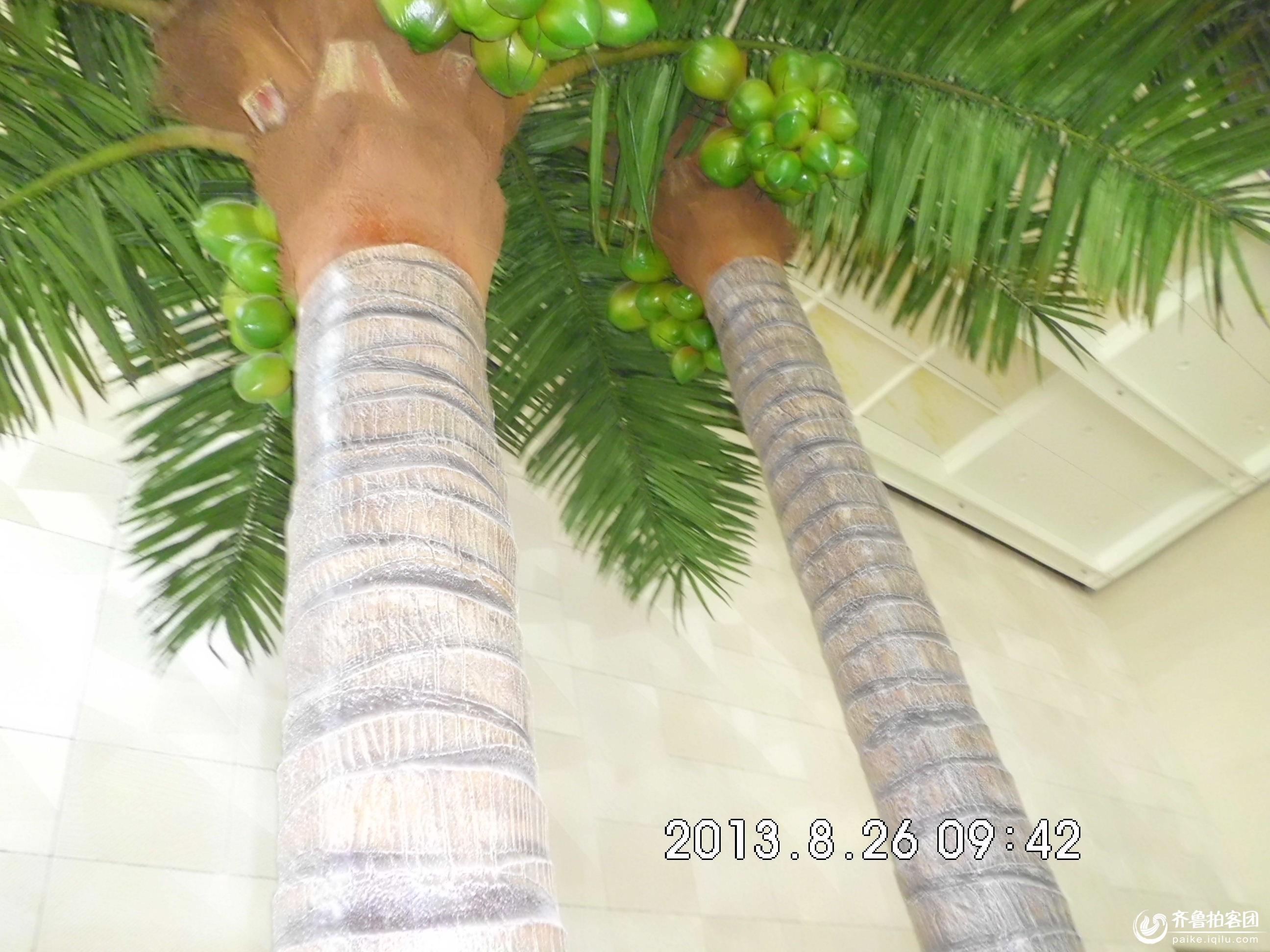 日照拍客 69 椰子树  分享到:qq空间新浪微博腾讯微博人人网微信qq