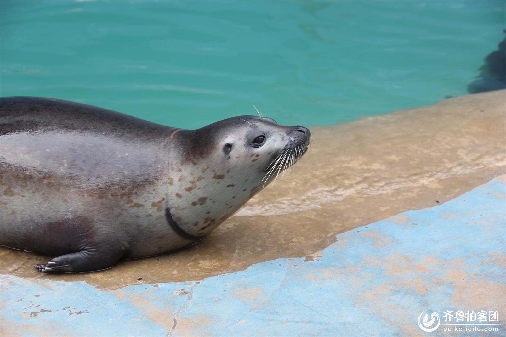 壁纸 动物 海洋动物 桌面 1607_1071