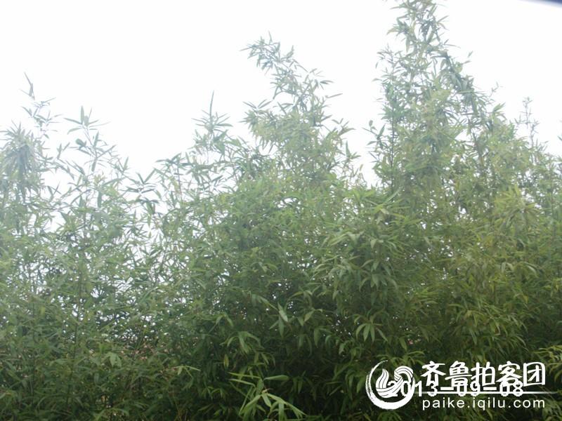 竹子开花节节高.