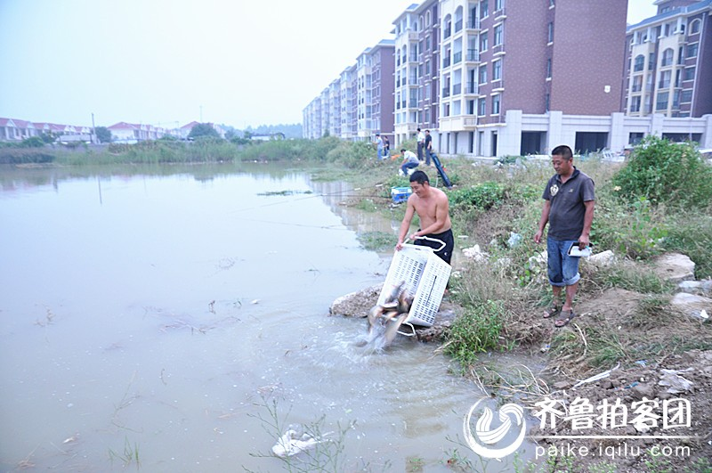 拍摄地点:单县永顺国际花园后院.