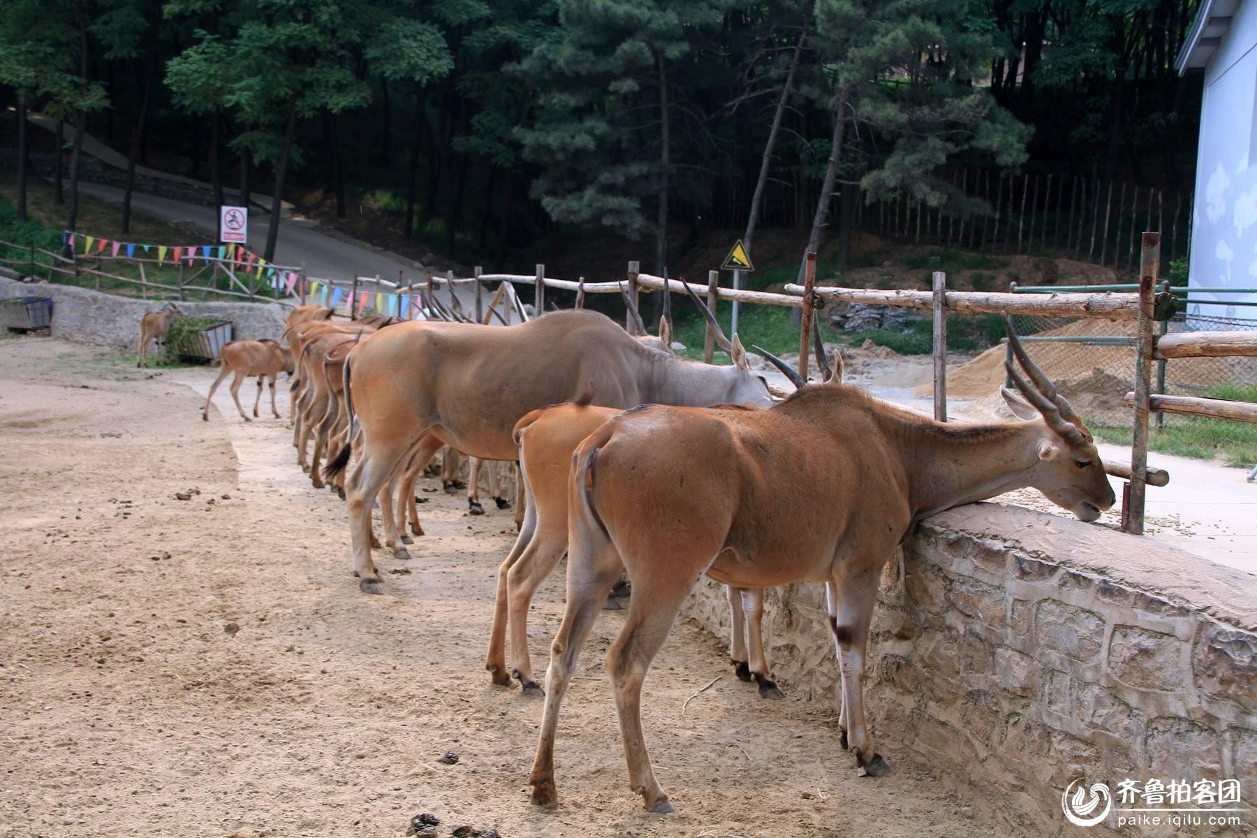济南市跑马岭野生动物世界-----4