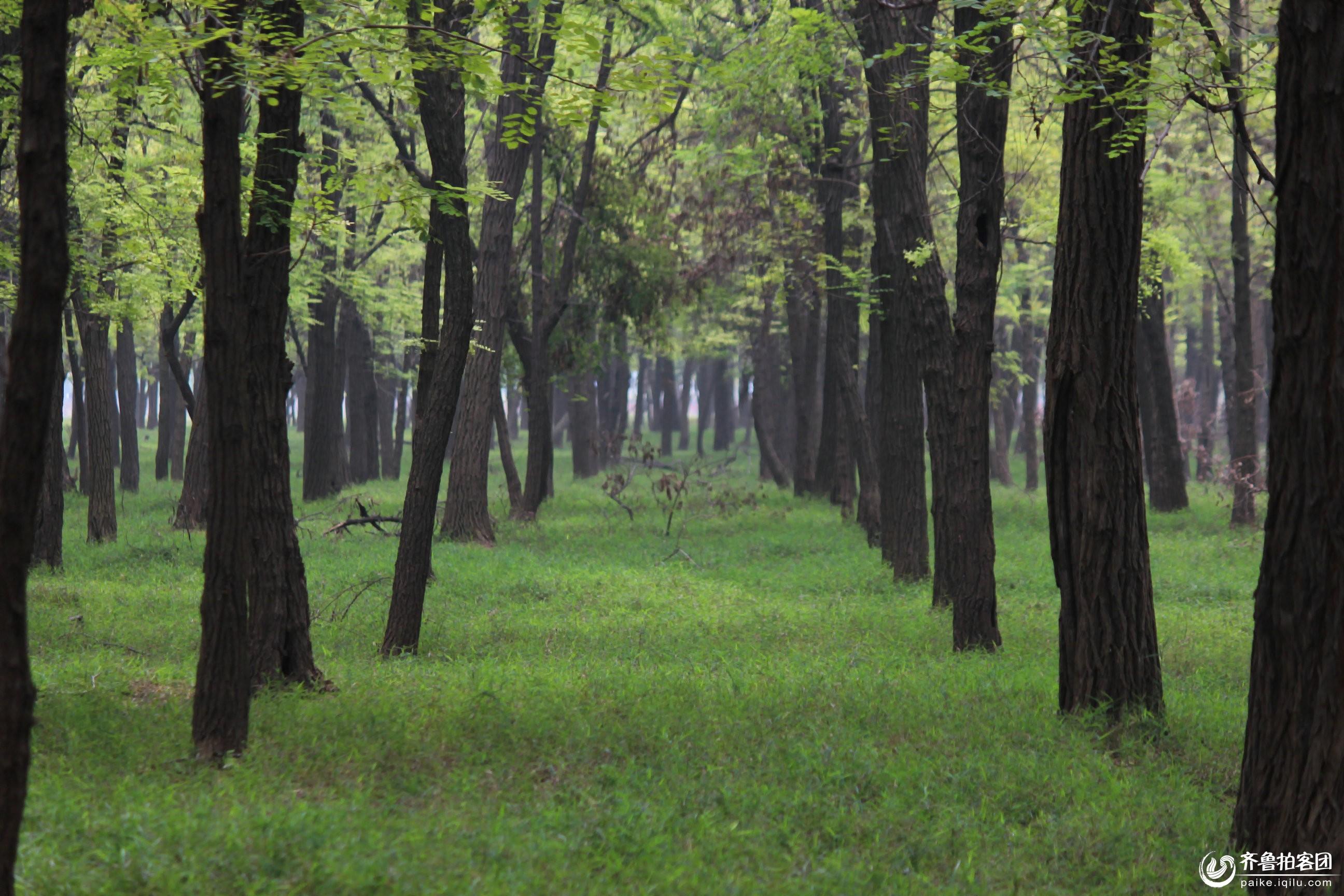 被摧毁的森林矢量图