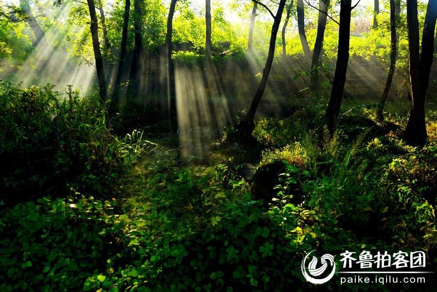 壁纸 风景 森林 桌面 900_601
