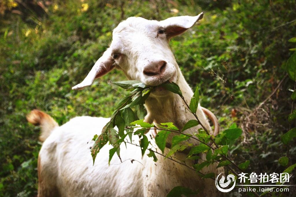 小羊  分享到:qq空间新浪微博腾讯微博人人网微信qq