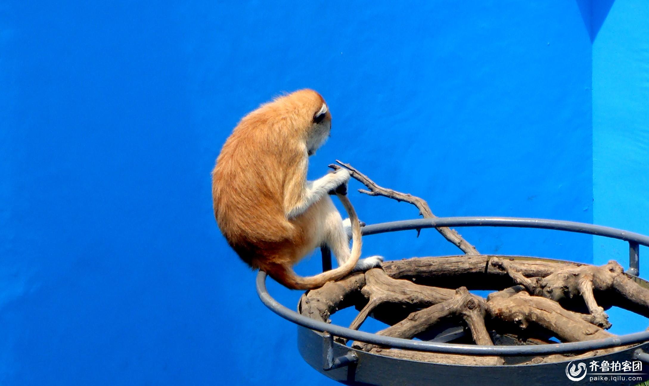 神雕山野生动物园 - 菏泽拍客 - 齐鲁社区 - 山东最大