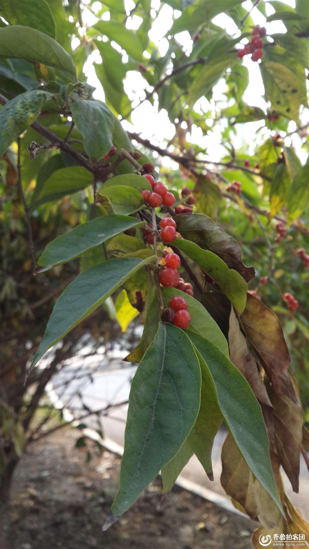 果树png素材