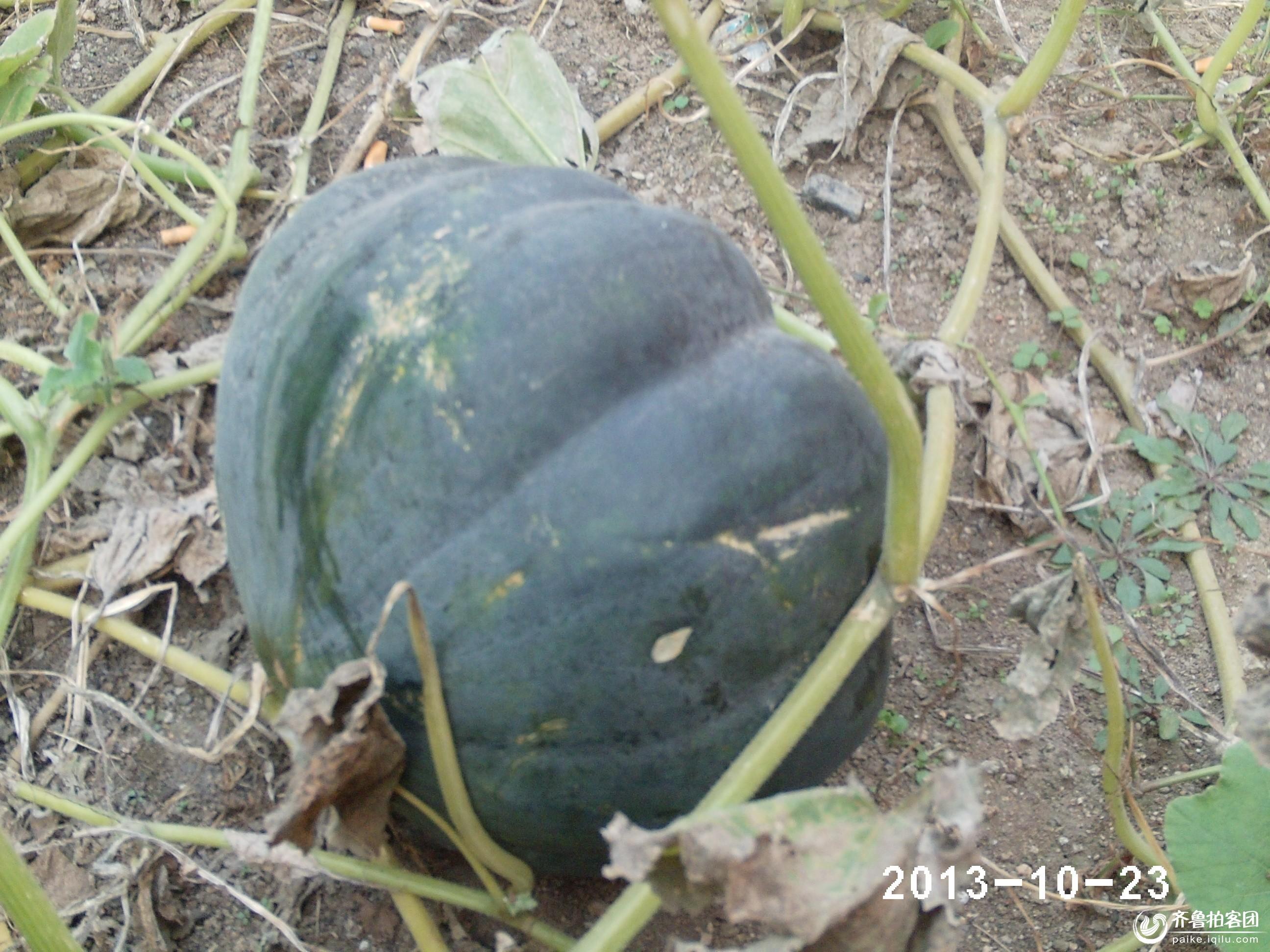 动物南瓜玉器图片