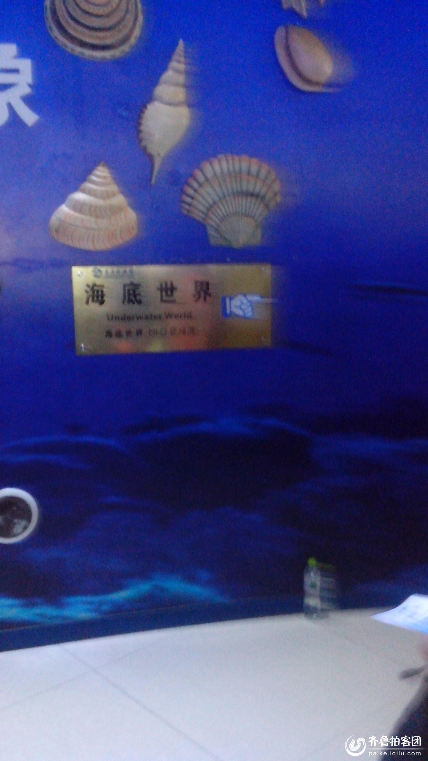 壁纸 海底 海底世界 海洋馆 水族馆 1440_2560 竖版 竖屏 手机