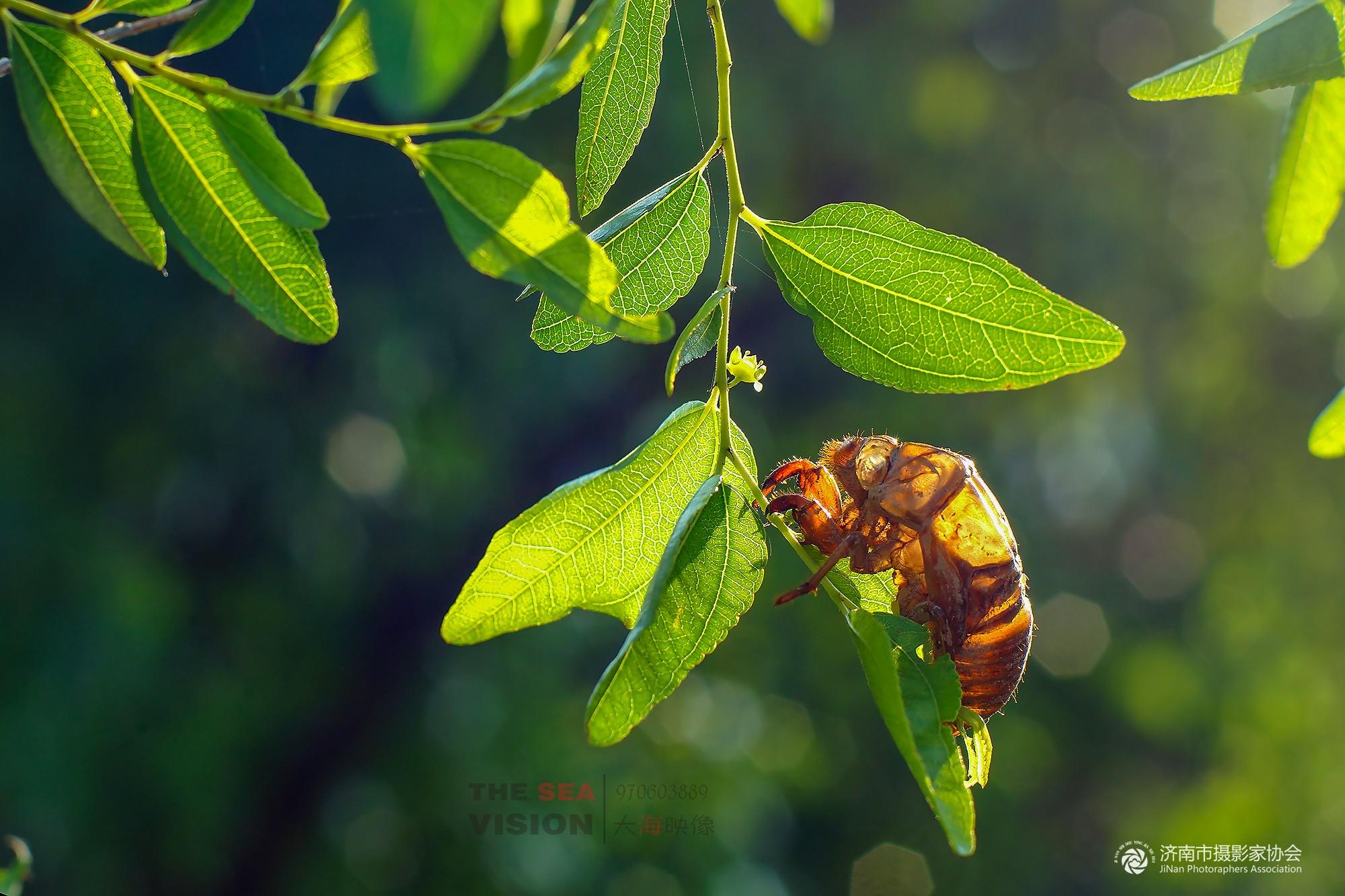 金蝉地种什么果树最好