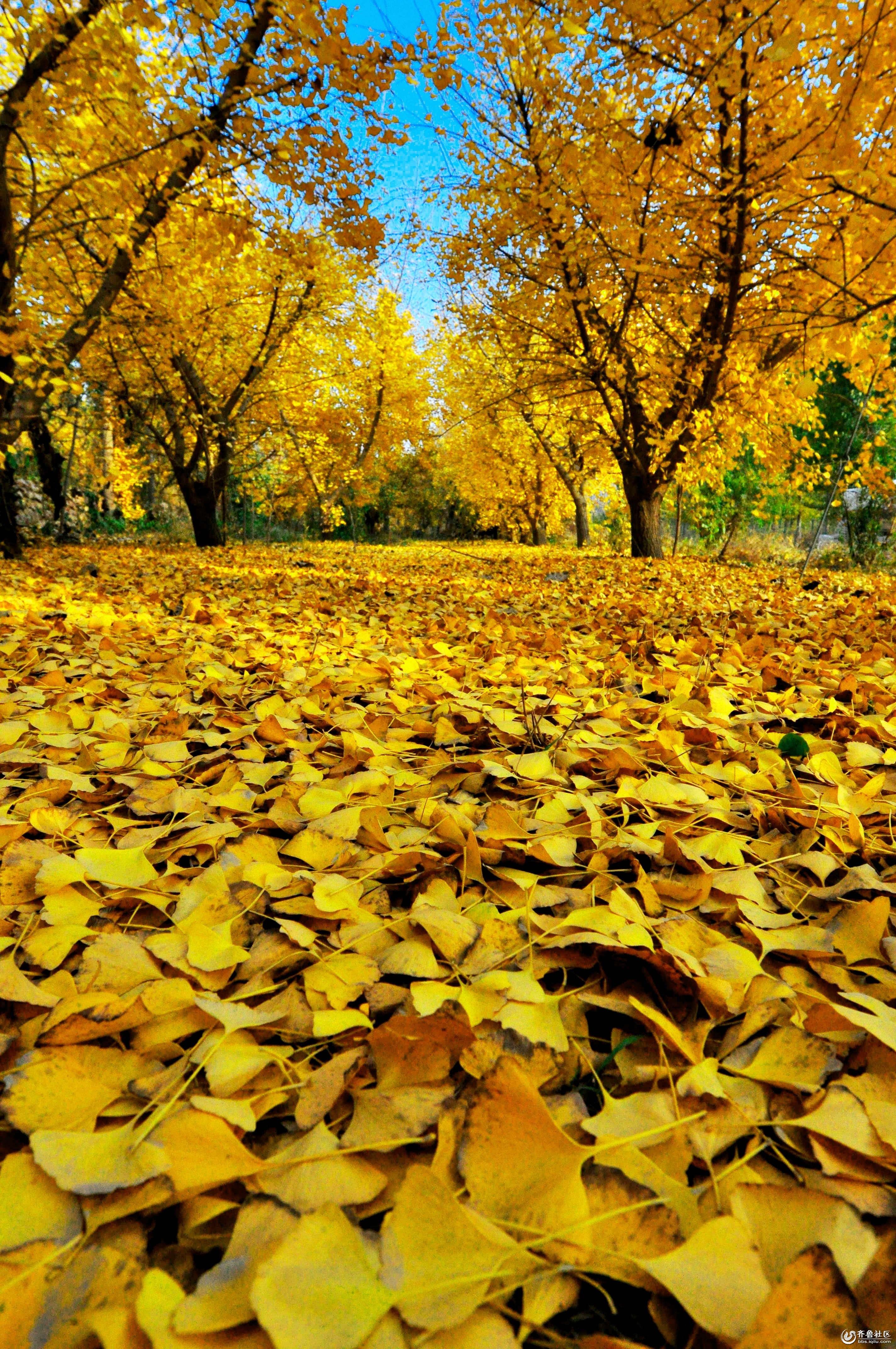 背景 壁纸 风景 绿色 绿叶 森林 树叶 植物 桌面 2848_4288 竖版 竖屏