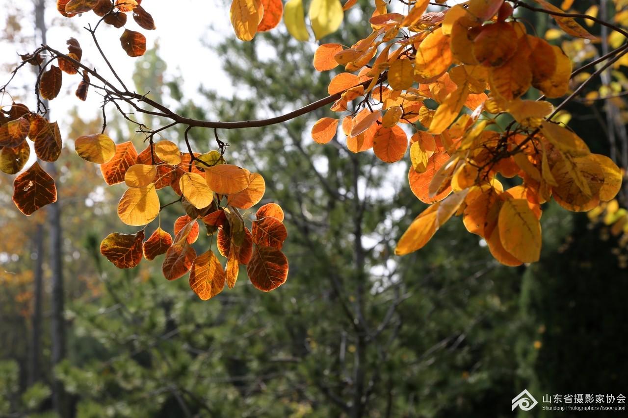 乐安公园:秋天的风景