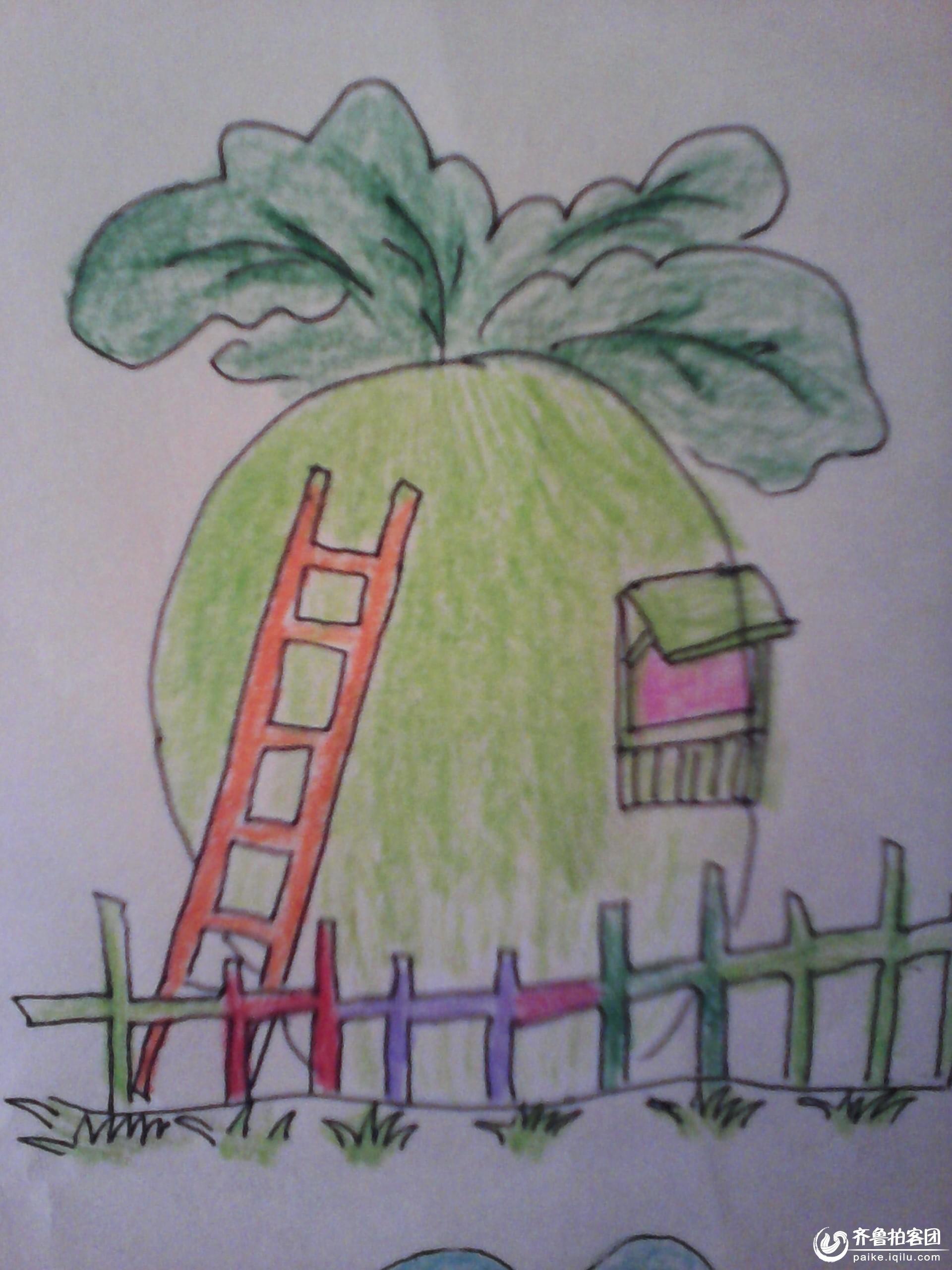 可爱的蔬菜房子,, - 校园拍客 - 齐鲁社区 - 山东最大