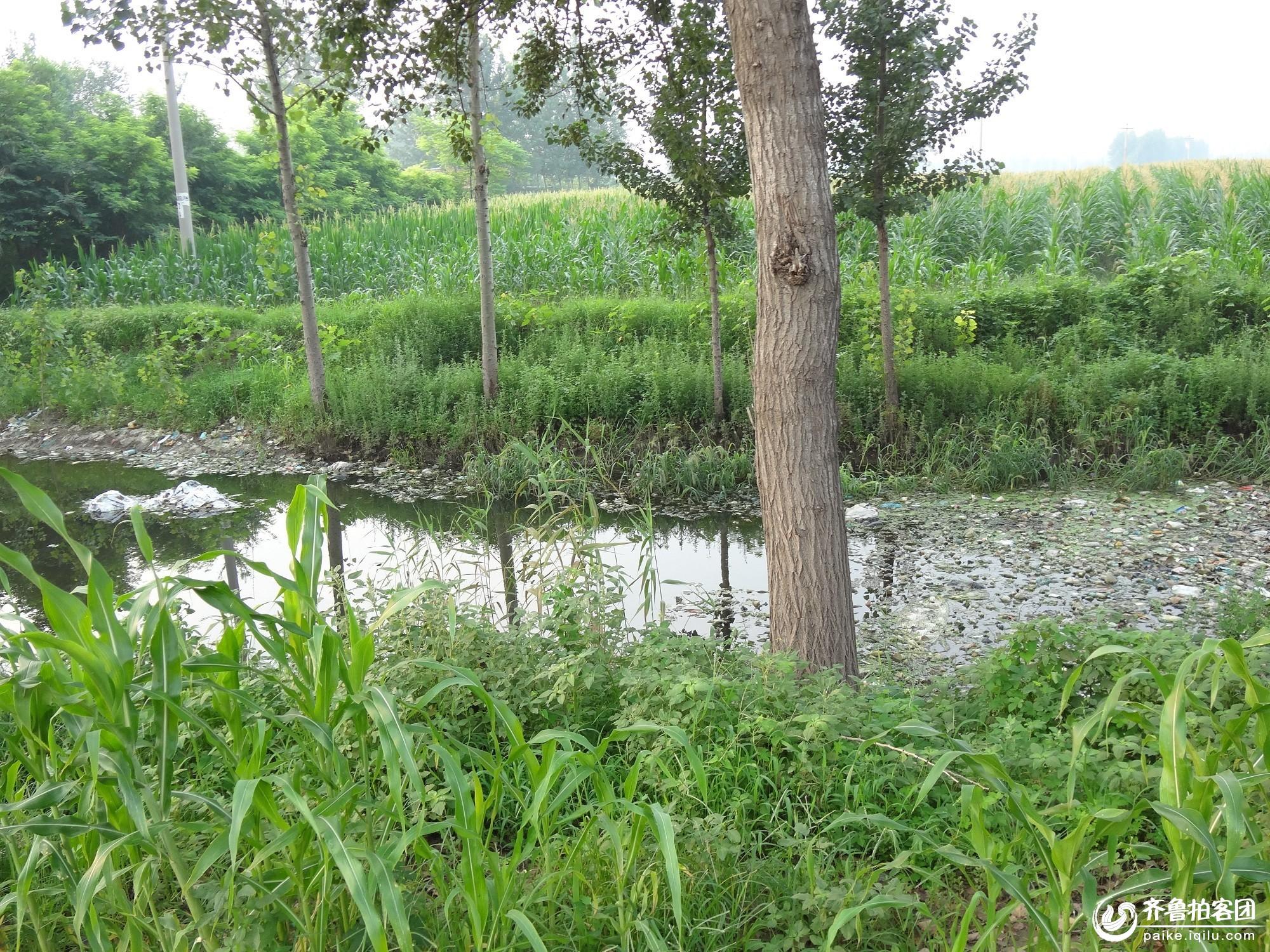 淄博桓台水上漂浮物现象严重