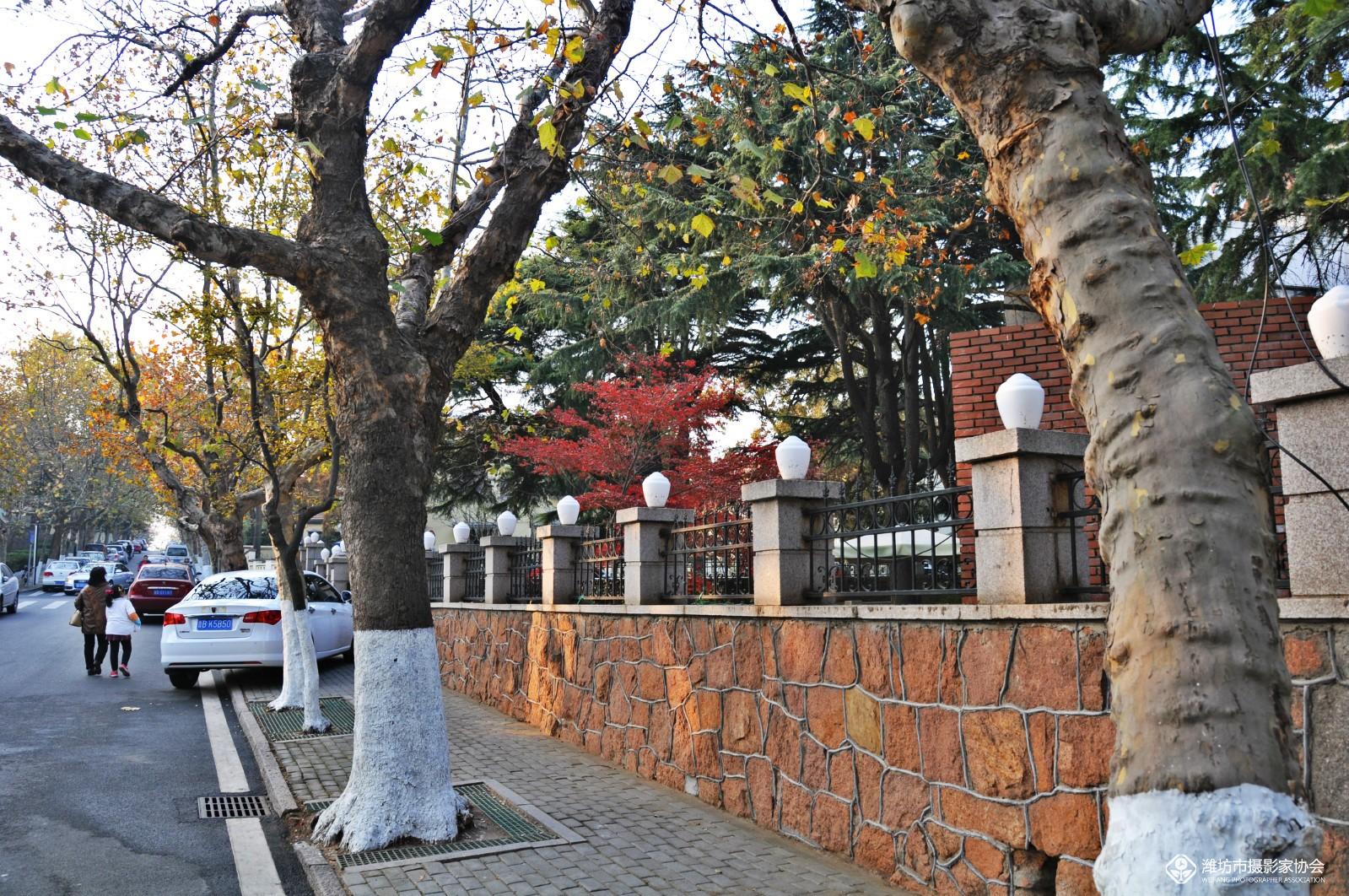 青岛八大关街景