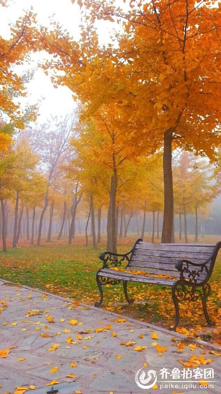 等秋风吹落叶