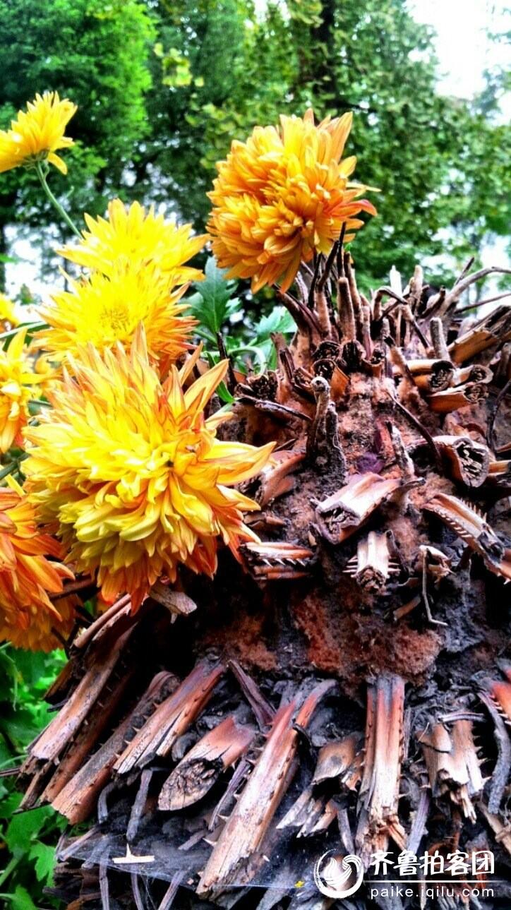 微信头像自然风景图片 花朵