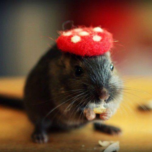 小老鼠带上帽子就是可爱