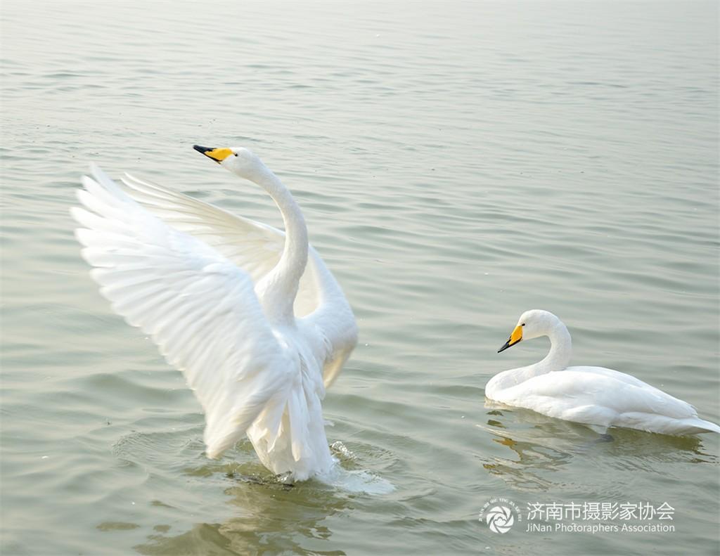 是国家二级重点保护野生动物白