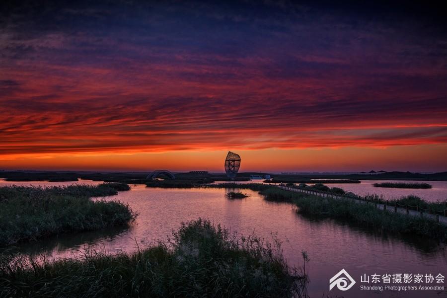 游寿光巨淀湖湿地公园(四) - 一帘竹影 - 一帘竹影