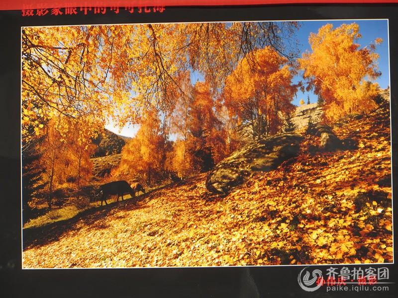 新疆可可托海风景区摄影展
