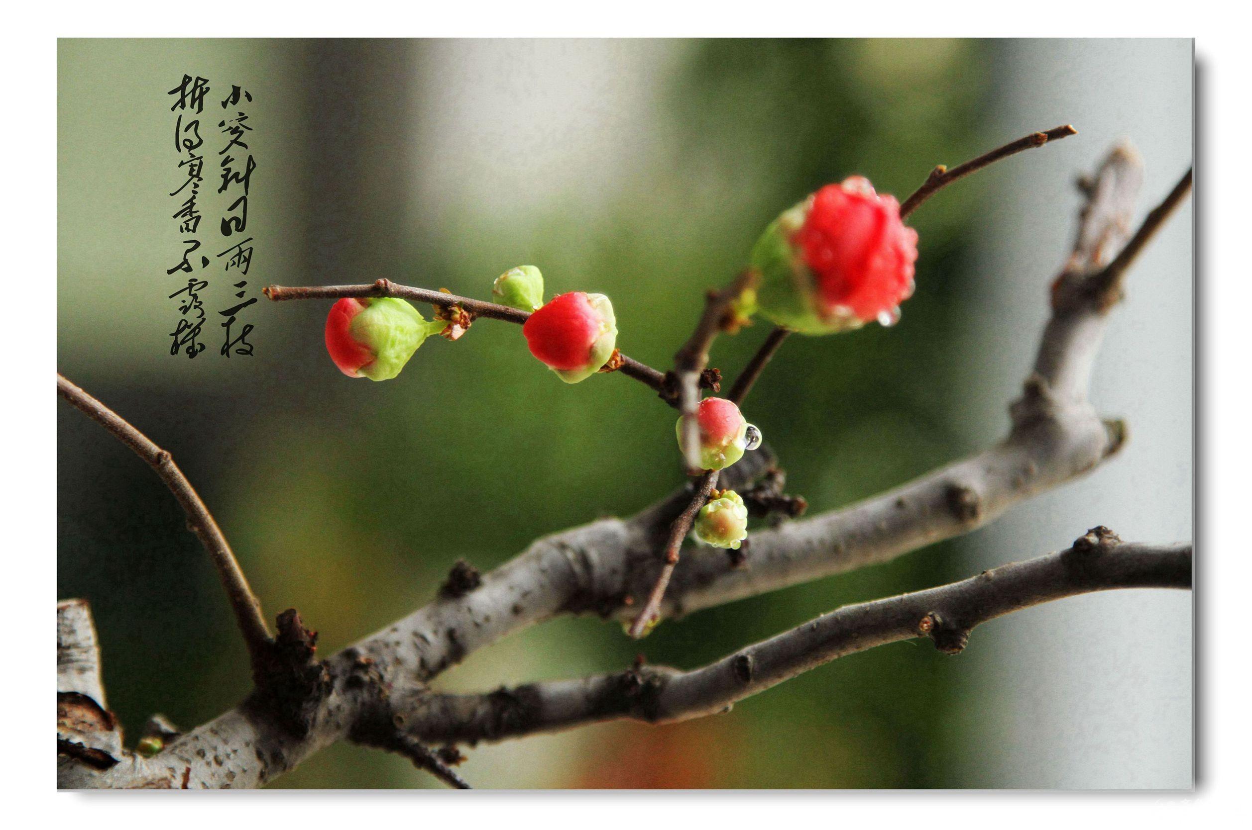 最美玫瑰花一枝 壁纸展示图片