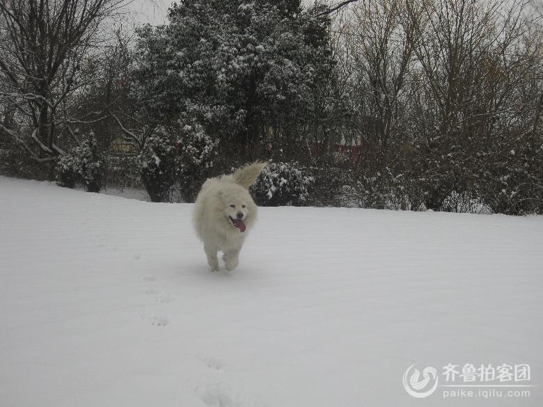 动物图片带字有雪景
