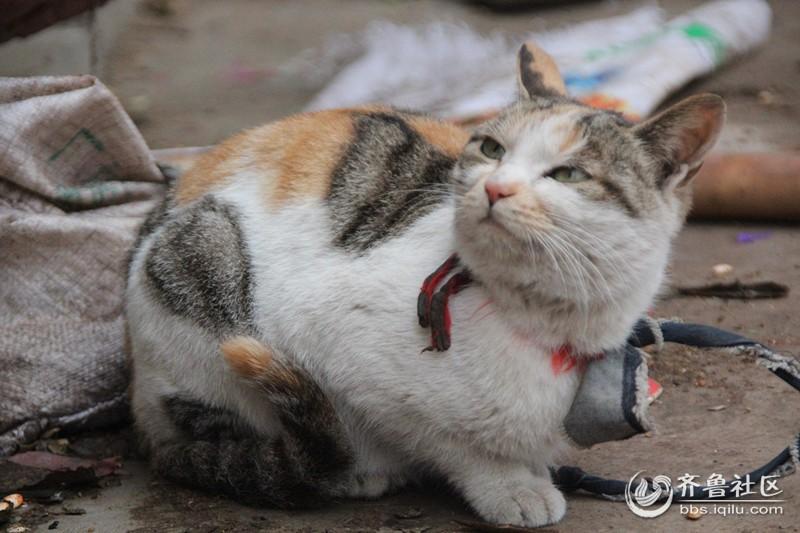 可爱的小花猫 - 沂水论坛