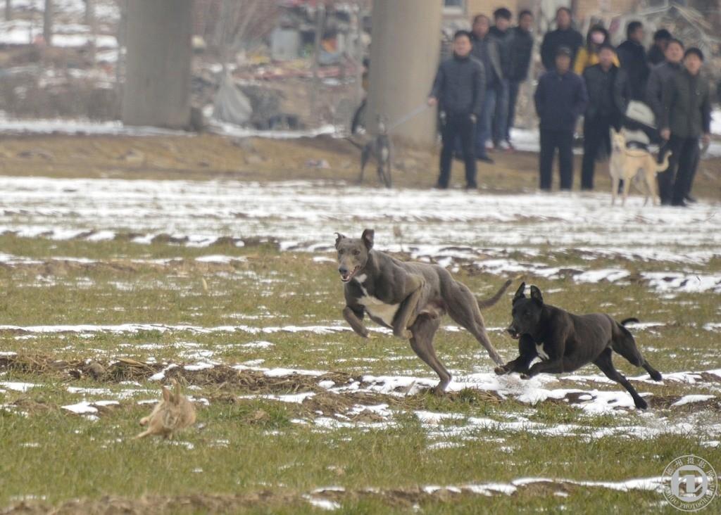动物比赛跑步图片