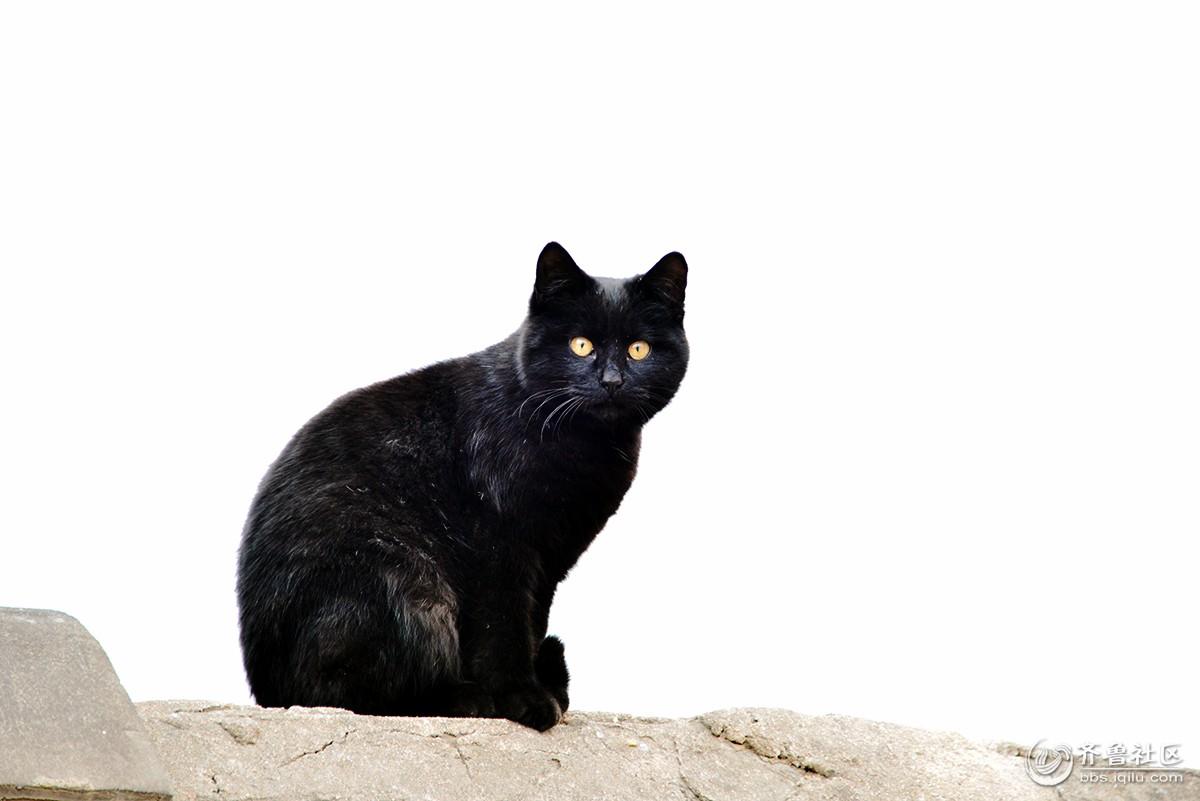 动物郁闷的图片 黑猫