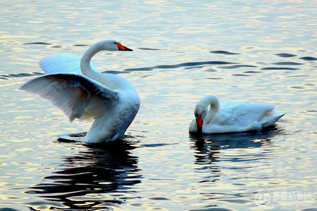 动物 鸟 鸟类 1025