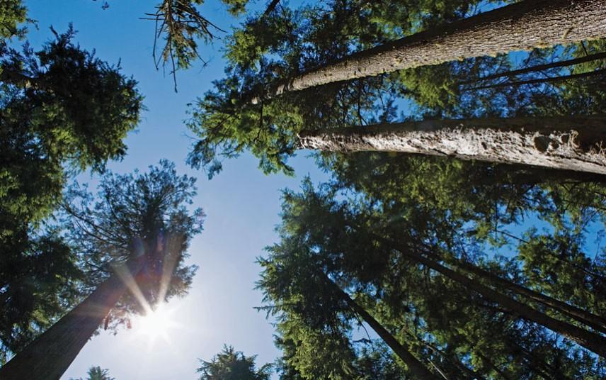 老翁负债种树,女儿却因非法占林被拘捕