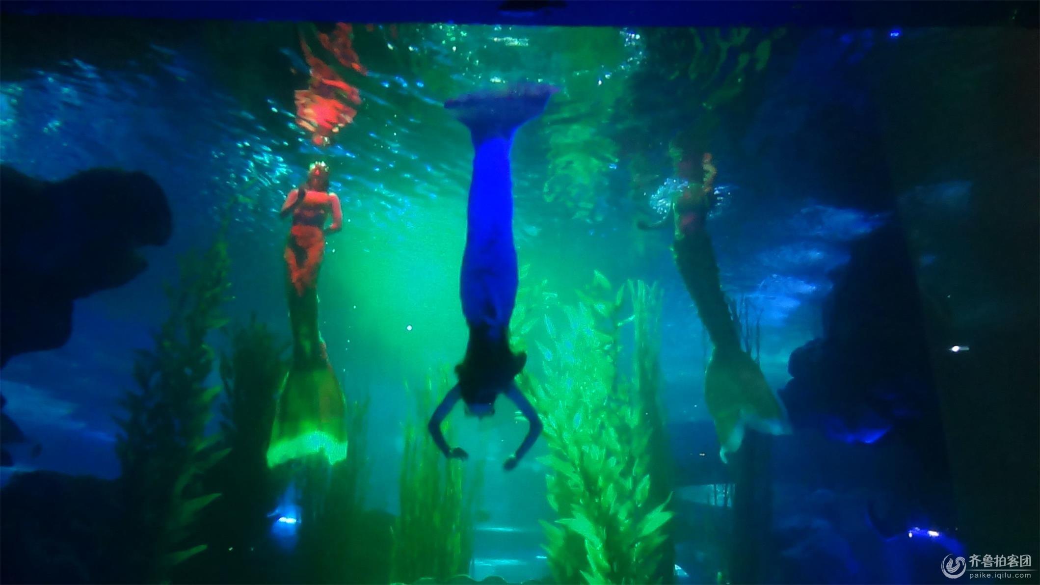 齐鲁拍客团 69 校园拍客 69 海底世界的美人鱼  分享到:qq空间